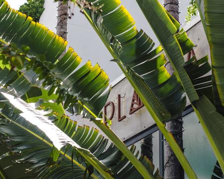PLANTA, South Beach